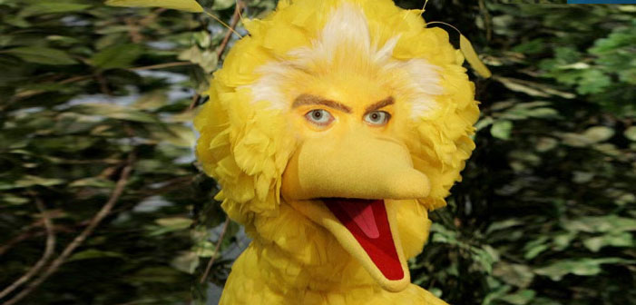 big bird with people eyes
