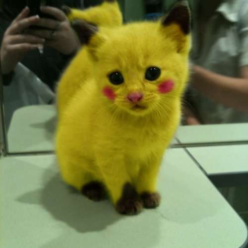 Things We Need: Pikachu Kitten