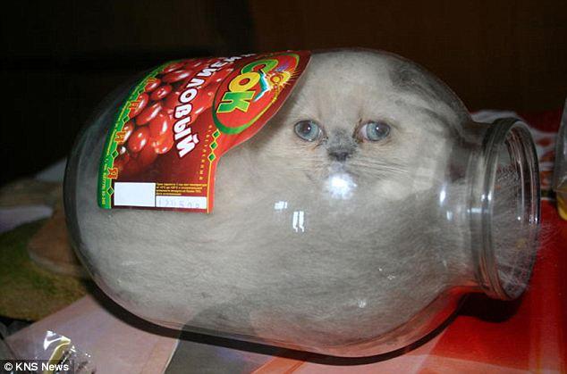 Cutest Cat Ever! Meet Ksyusha