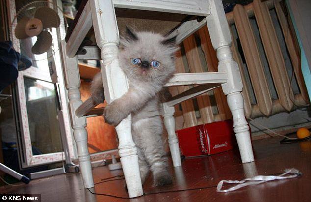 ksyusha, cutest cat