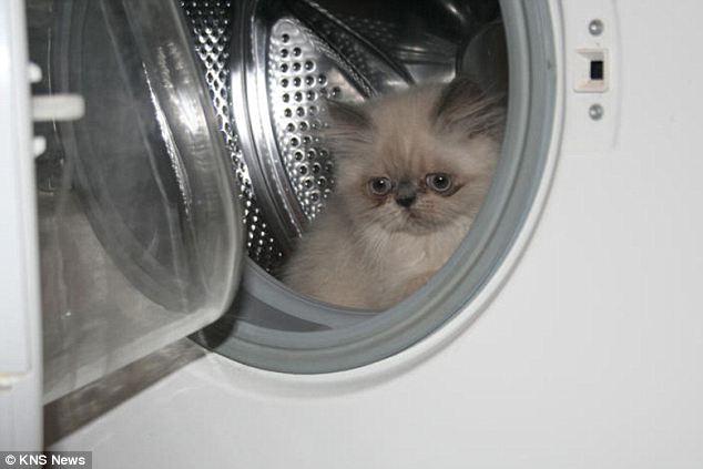 houdini cat, dryer