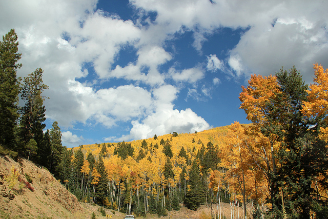 Gay Travel Tip: the fall is the time to see the aspens turn to gold