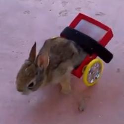 Meet the All Terrain Bunny