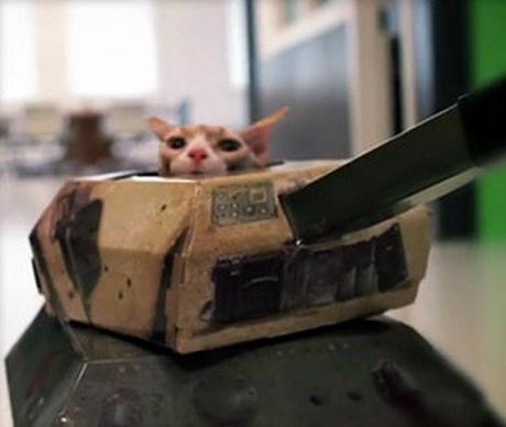 Cats In Tanks: MUST WATCH!