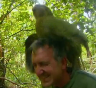 Shagged By a Parrot: Rare Bird on Man Sex