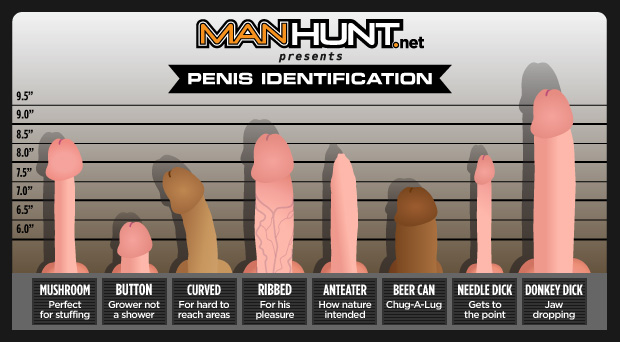 manhunt penis identification, penis chart, types of penis, penises chart, types of penises