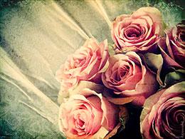 roses, rose bouquet, flowers, flower bouquet