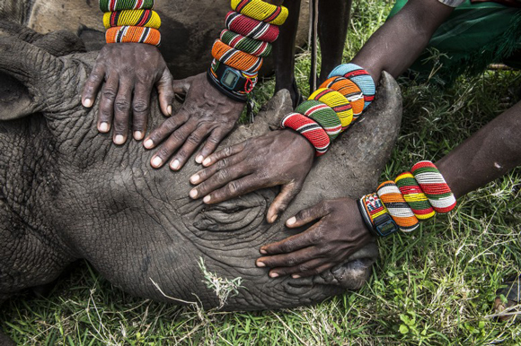these-20-award-winning-photos-20, world press photo, world press photo contest, rhino, africa, african rhino, Malaysia Airlines