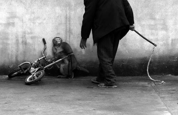 these-20-award-winning-photos-19, world press photo, world press photo contest, animal cruelty, monkey training, trained monkey, circus monkey