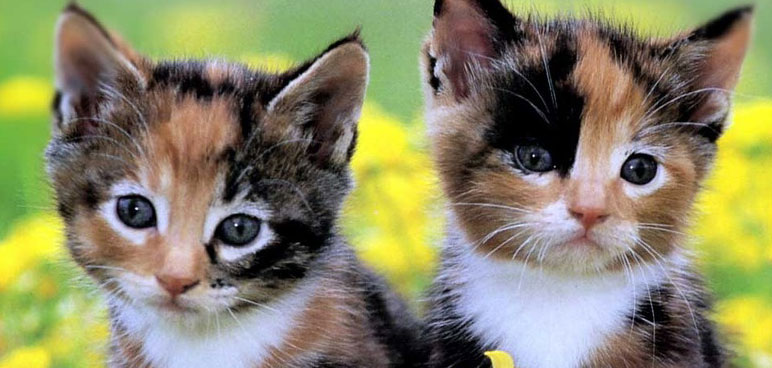 two cute kittens, meow, meow