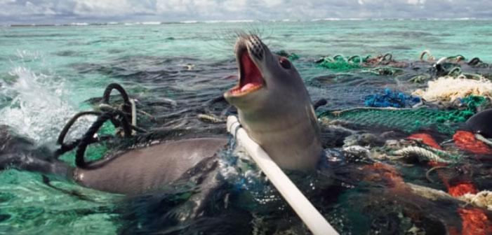 Jovem Gênio Projeta Plano Mestre Para Limpar os Oceanos do Mundo