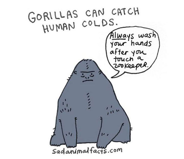 gorilla, sad, animal facts, cartoon, gay blog, queer, lgbt, funny