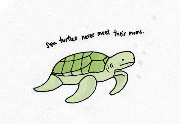 turtles, sad, animal facts, cartoon, gay blog, queer, lgbt, funny