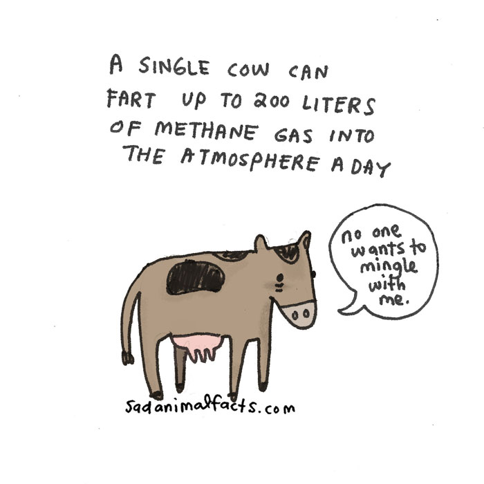 cow, sad, animal facts, cartoon, gay blog, queer, lgbt, funny