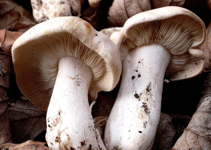 Mushrooms, Paul Stamets, SMART Pesticides, Monsanto