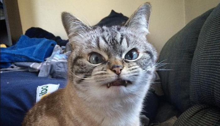 PICS: Move Over Grumpy Cat; Loki Is The Web's New Scowl Cat