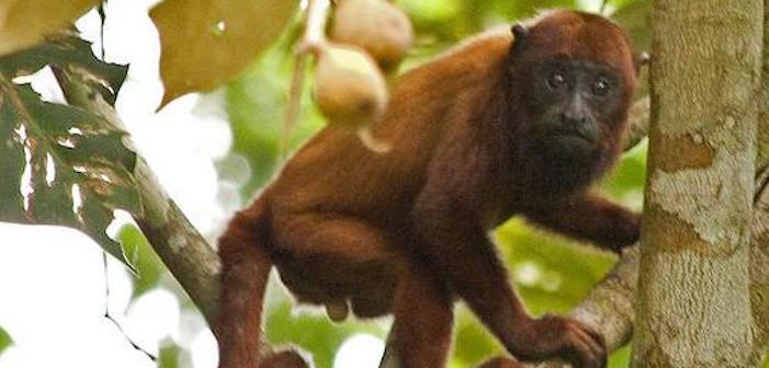monkey, junkoff, dick, cute
