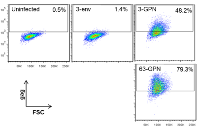 Chimp adenovirus vaccine vectors were engineered to express the artificial HIV protein, GPN.