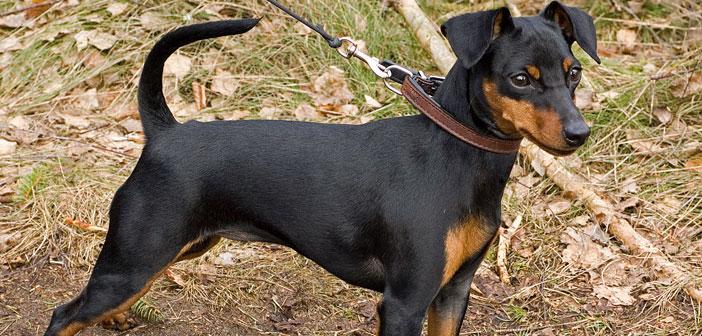 Masturbation Killed The Best Dog I Ever Owned
