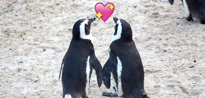 penguin, gay marriage, marriage equality, antarctica, penguins in love, gay penguins