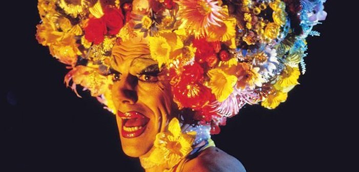priscilla, queen of the desert, drag, terence stamp, australia