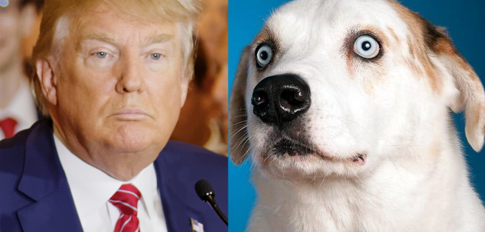 cute animals resist trump