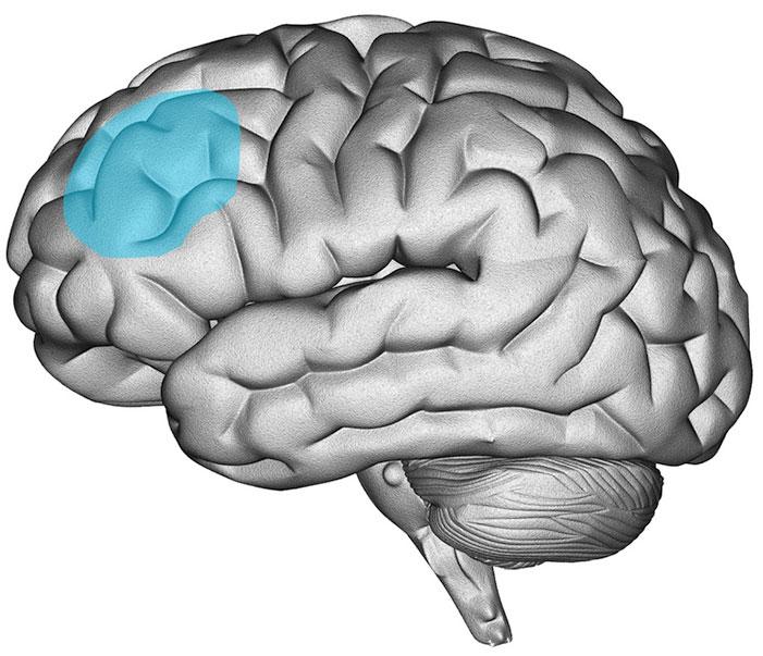 study religious fundamentalism brain damage