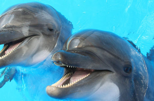 dolphins gay