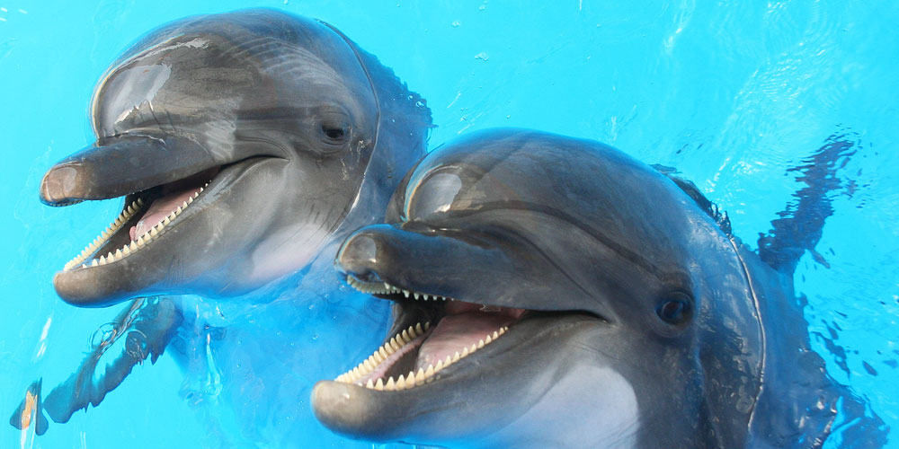 Australian Dolphins Are Gay, Bisexual and Have Orgies (Just Like Us)