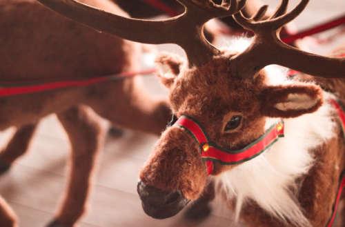 reindeer sex sweater