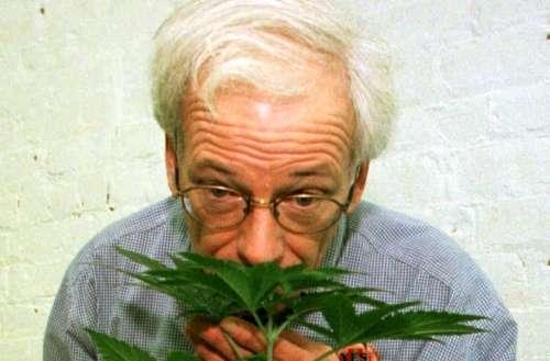 Dennis Peron, medical marijuana