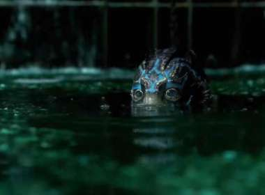 shape of water sex toy teaser