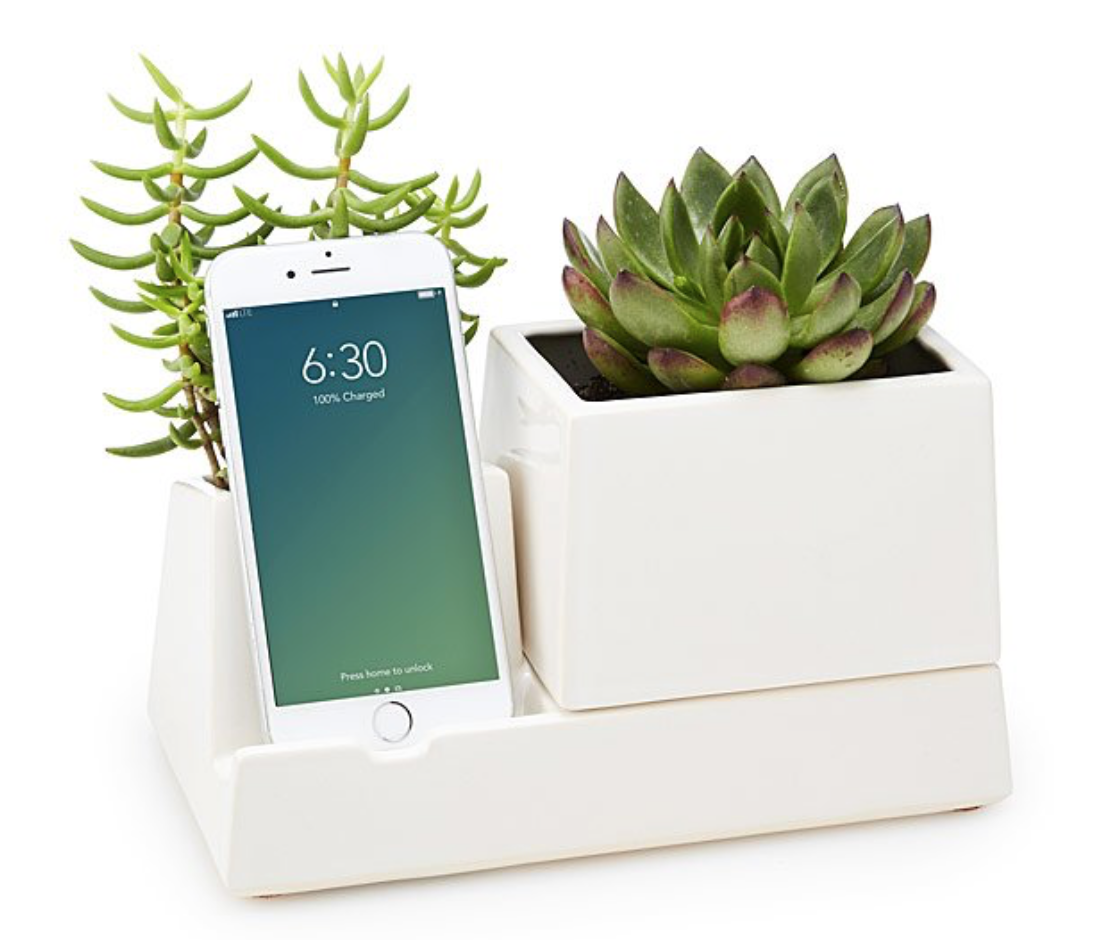 home office planter working from home