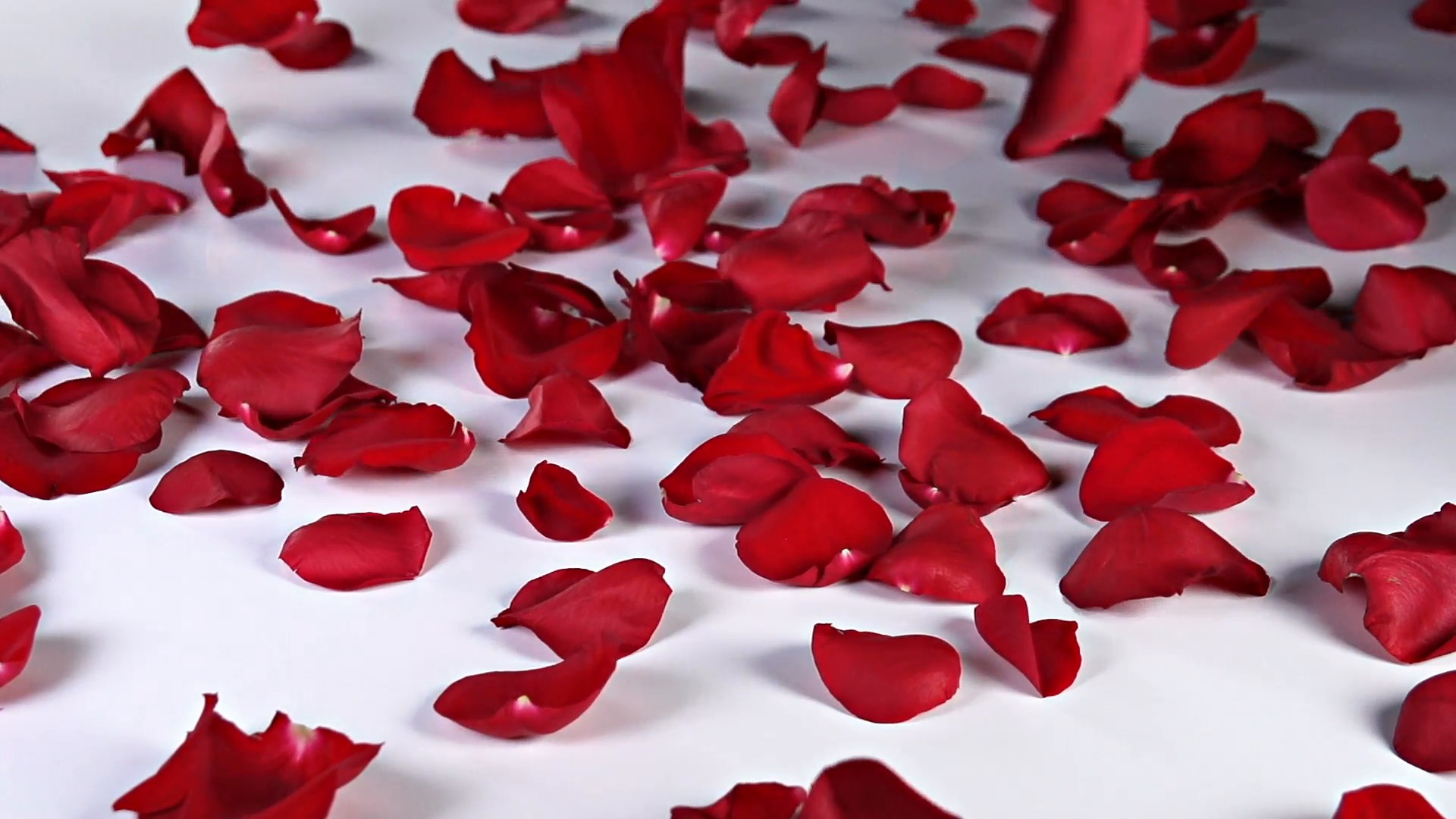 romanric night rose petals