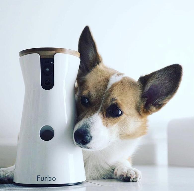 pets essentials furbo dog camera