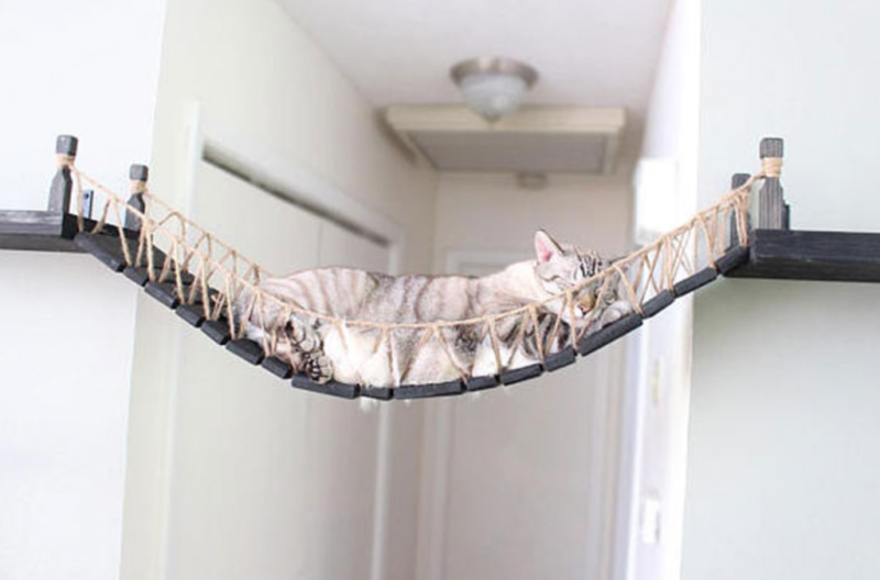 pet products cat bridge