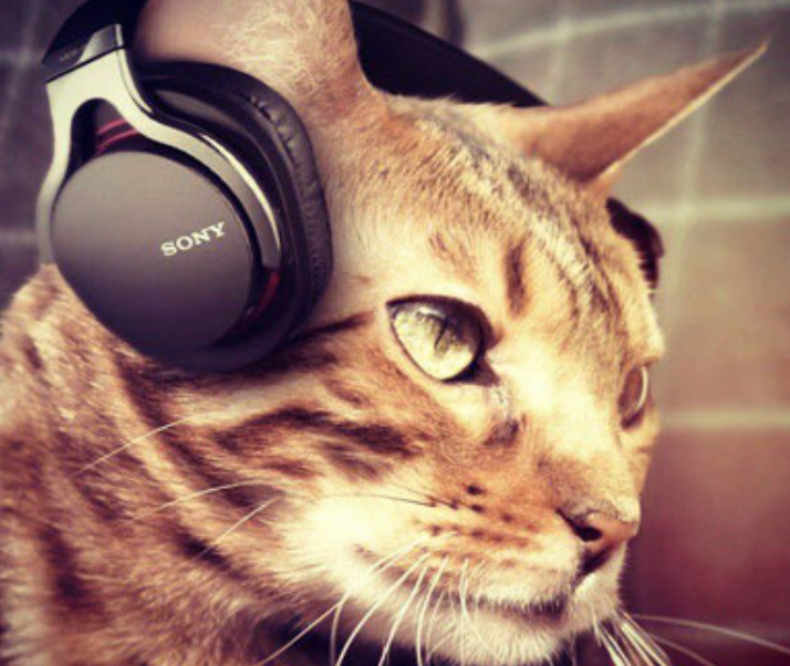 pet products cat music