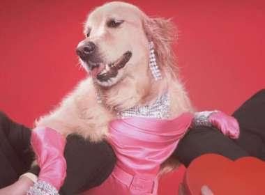 Madonna dog 09, Vincent Flourent 09,Maxdonna 09