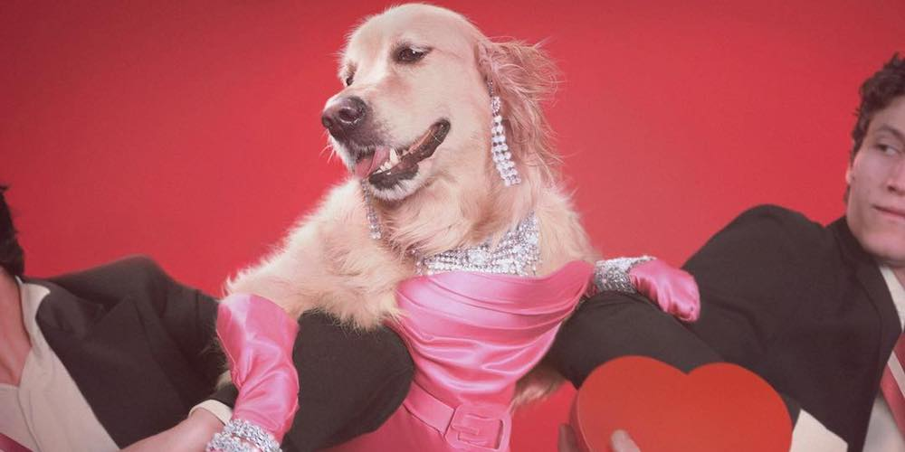 This French Photographer Styled His Dog After Iconic Madonna Images to Fundraise for Her Charity
