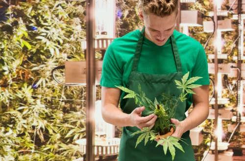 Mormon church marijuana 01, Utah Medical Cannabis Act 01