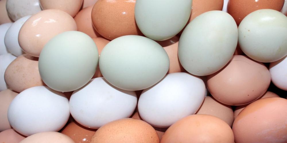 Homem coloca 15 ovos