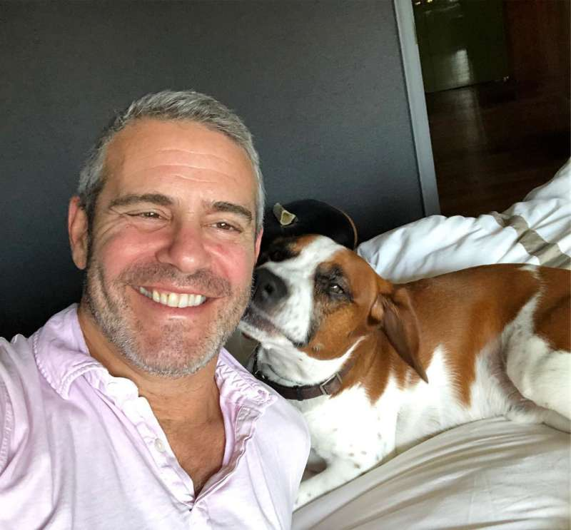 andy cohen gay celebrity pets