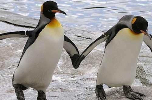gay penguin parents 01