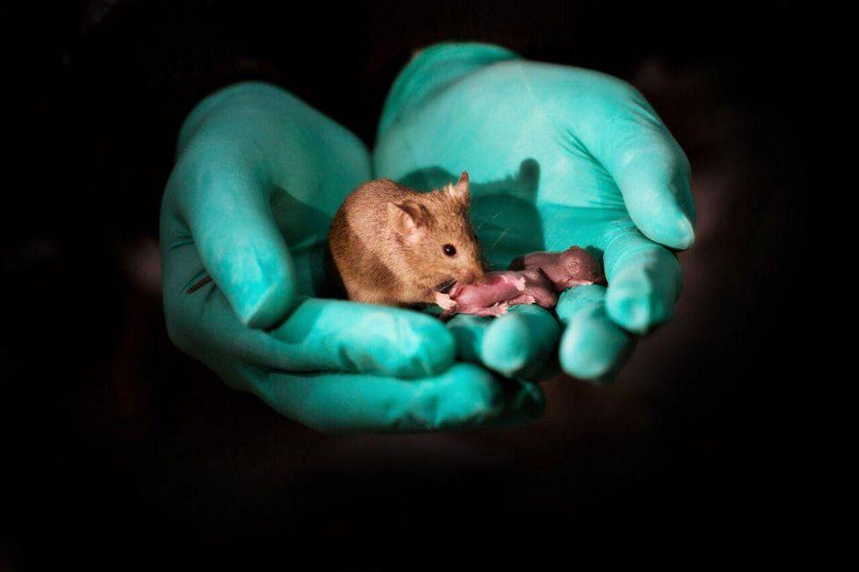morgan mcmichaels mice