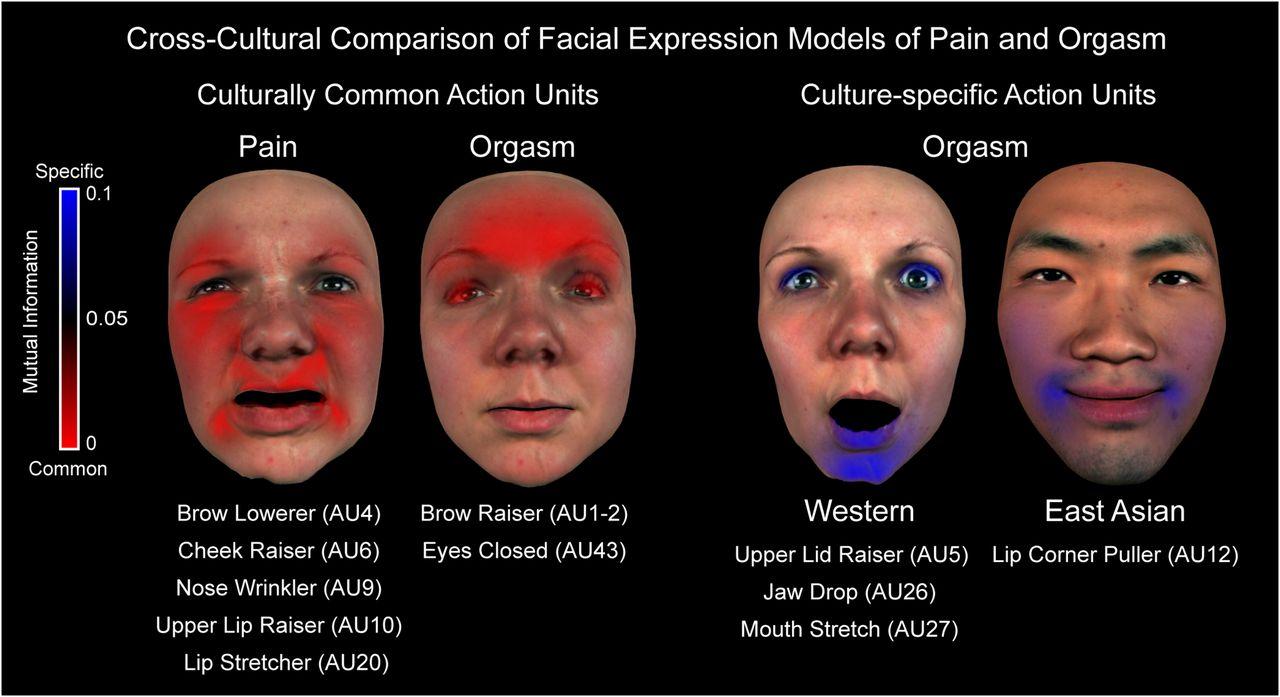 orgasm faces study