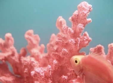 pantone living coral teaser