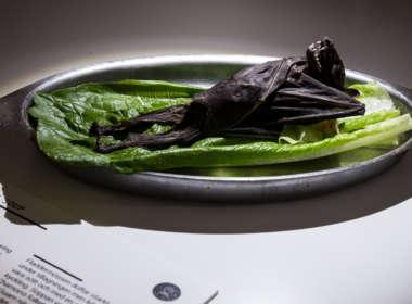 disgusting food museum teaser