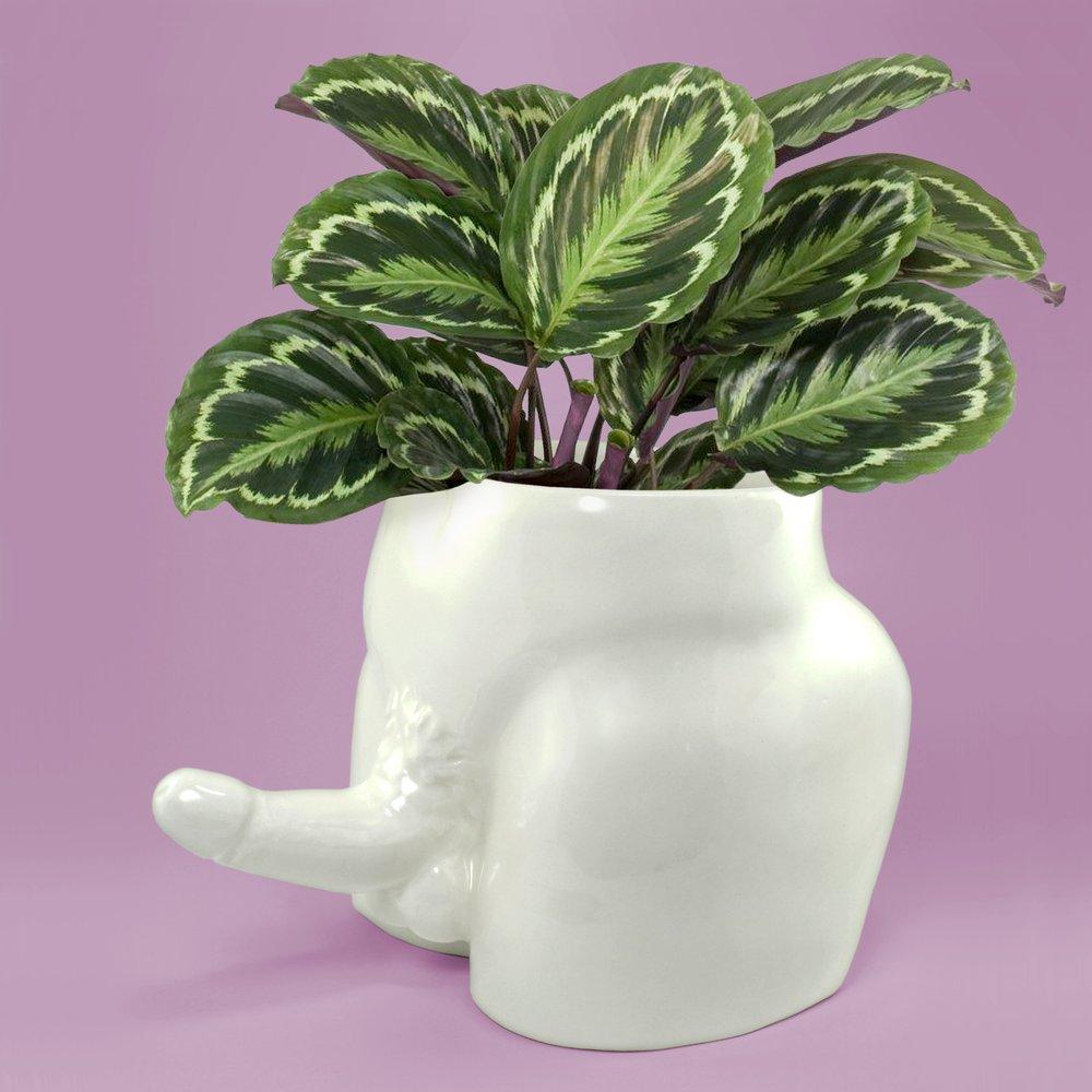 pansy ass ceramics penis planters 1