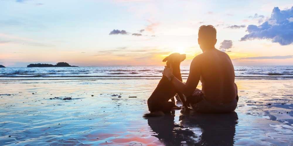 Лучший друг человека: 7 причин, почему собаки лучше бойфрендов